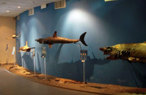 Shark Wall in the Aquarium
